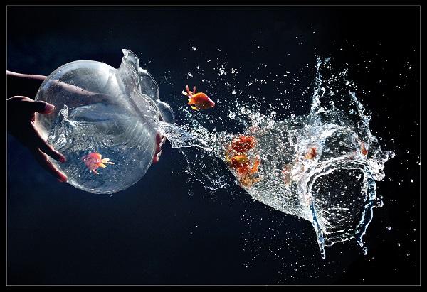 Berwajah Ikan-