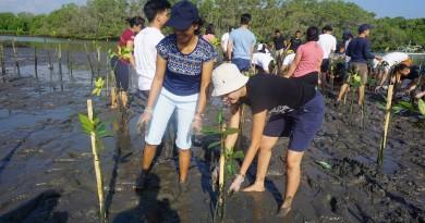 Mangrove Planatation 1