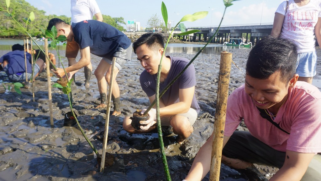 Mangrove Planatation 4